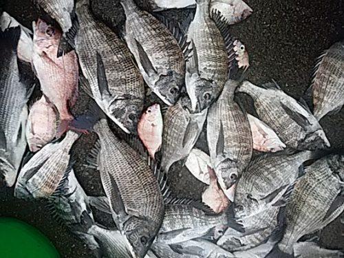 釣り物語1